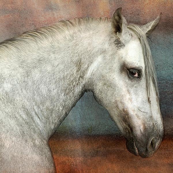 marie-sybel-pferdetraining-flyer-individuelle-groesse